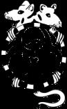 rotta-185x300